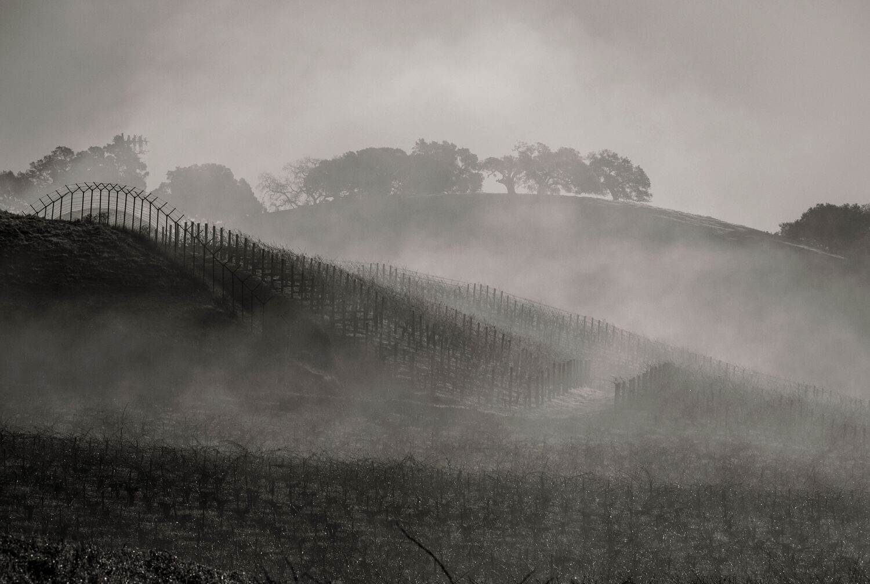 Landscape + Vineyard 4