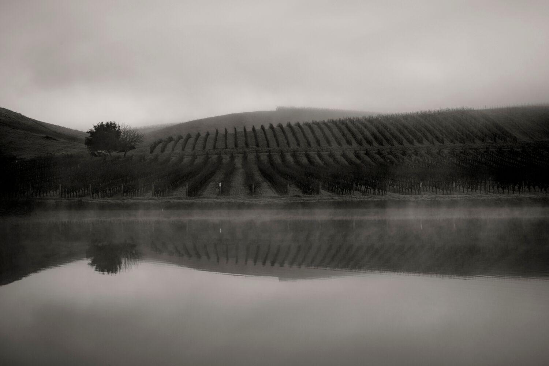 Landscape + Vineyard 6