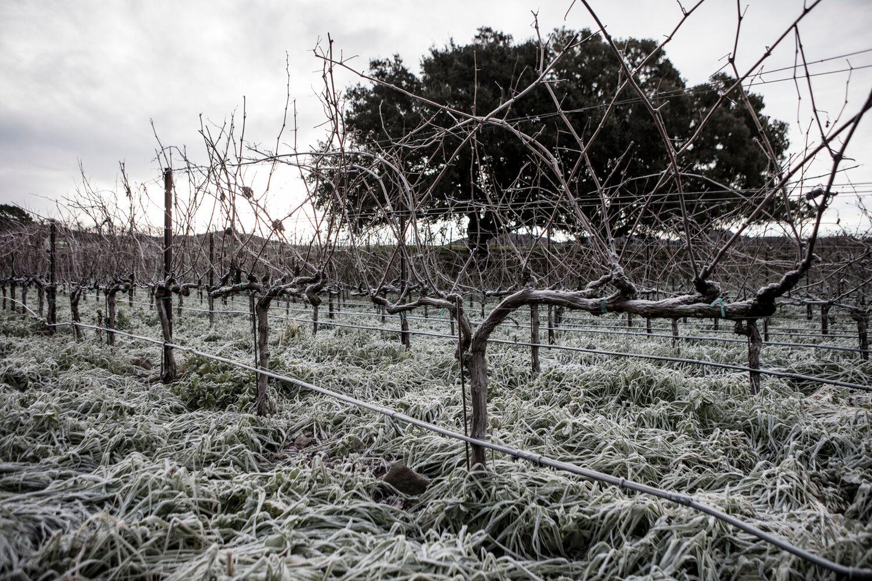 Landscape + Vineyard  2