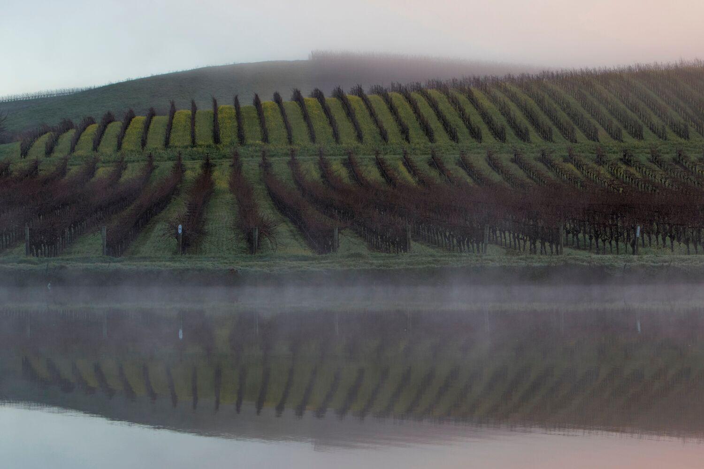 Landscape + Vineyard 10