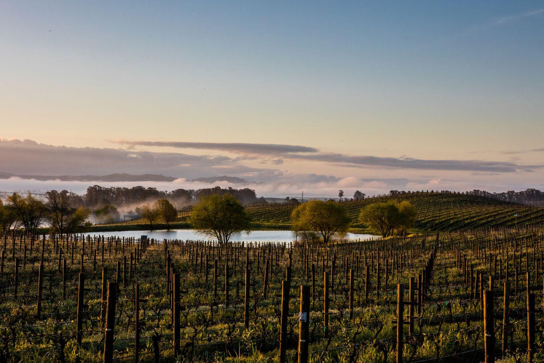 Landscape + Vineyard 18