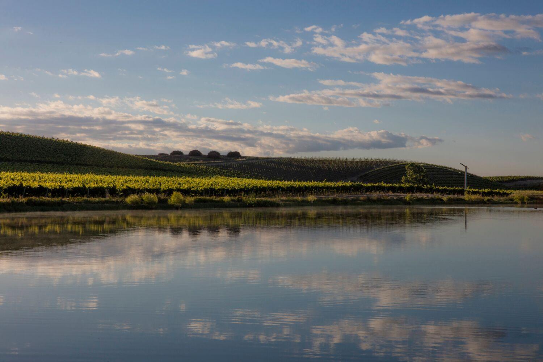 Landscape + Vineyard 19