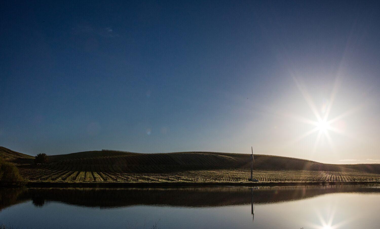 Landscape + Vineyard 22
