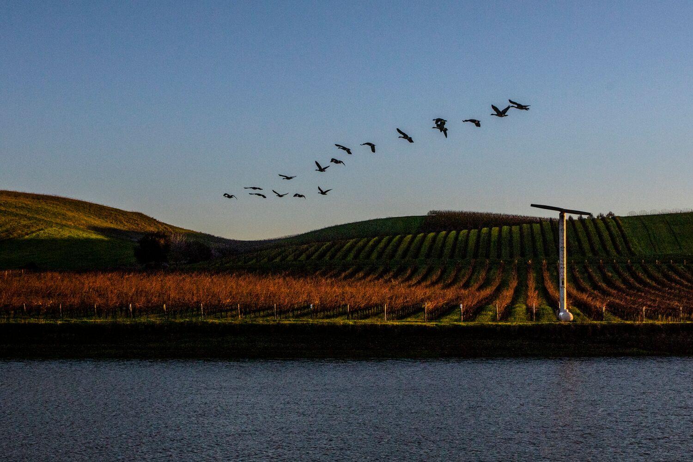Landscape + Vineyard 24