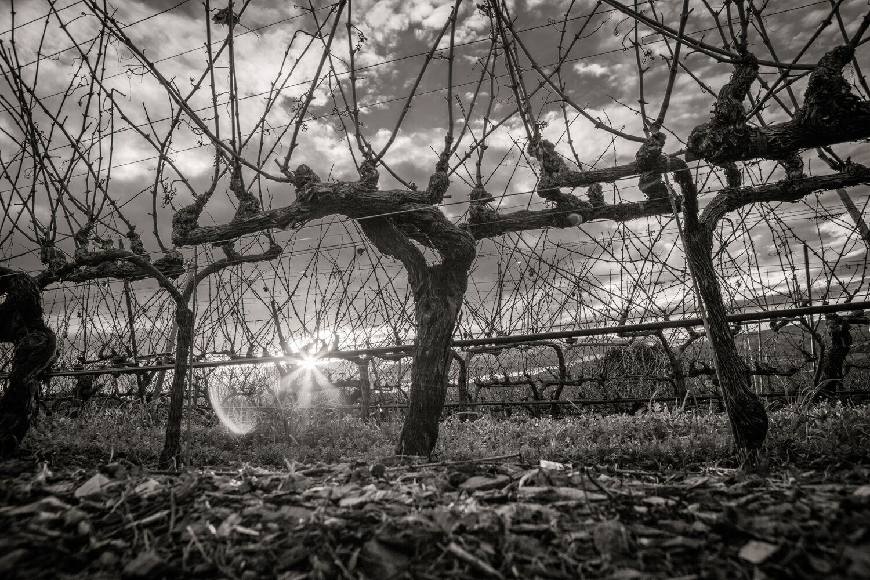 Landscape + Vineyard 23