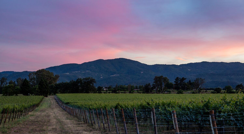 Landscape + Vineyard 25