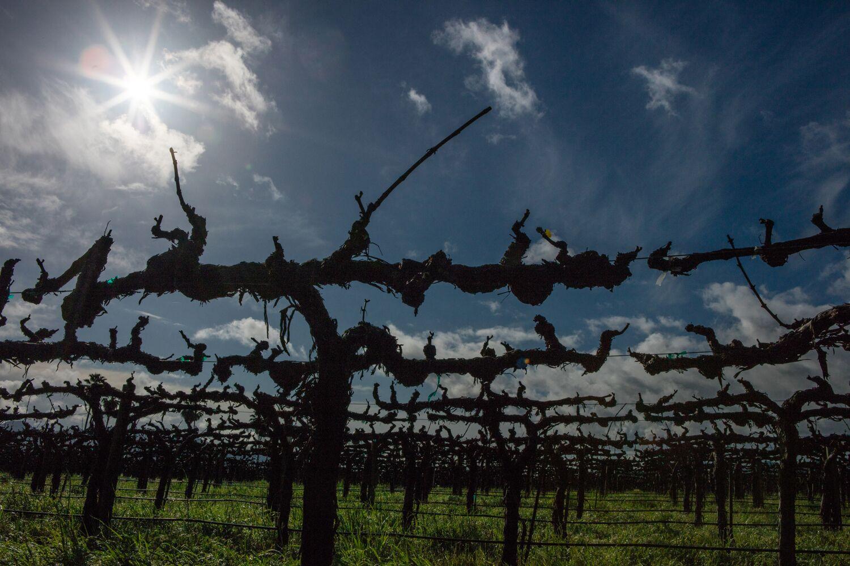 Landscape + Vineyard 26