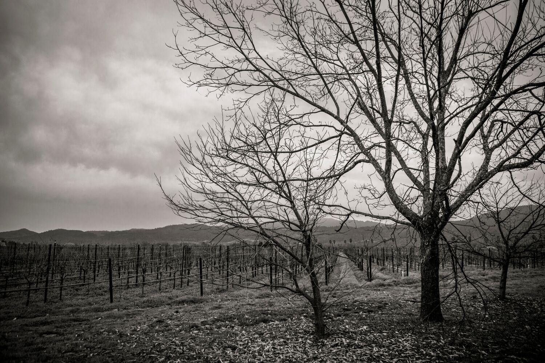 Landscape + Vineyard 28
