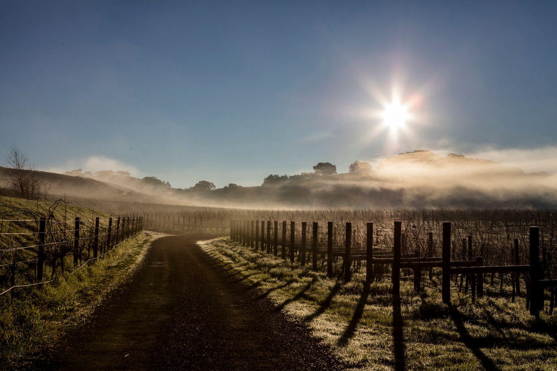 Landscape + Vineyard 29