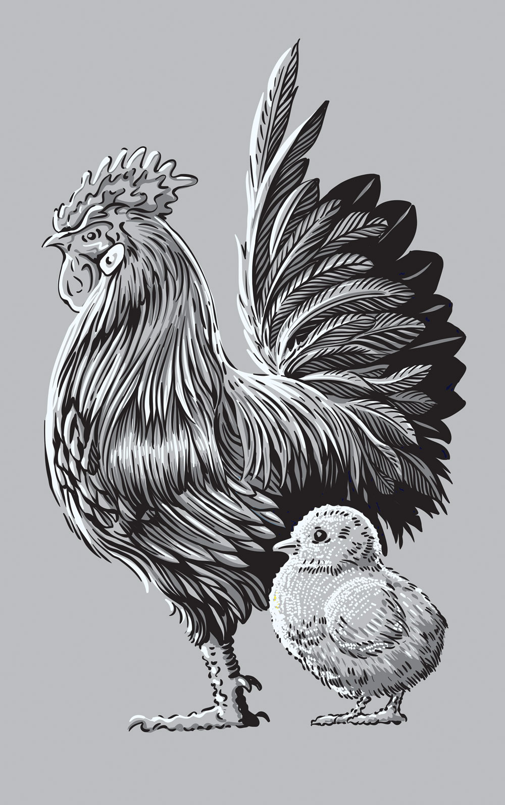 roosterChick-vectors.jpg