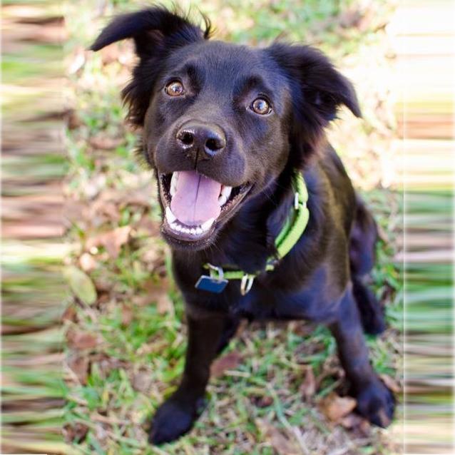 Puppy Trainer Perth