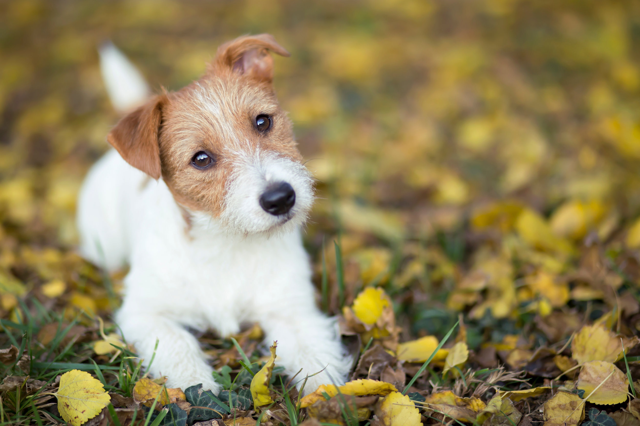 Everything you need to know about puppy school -