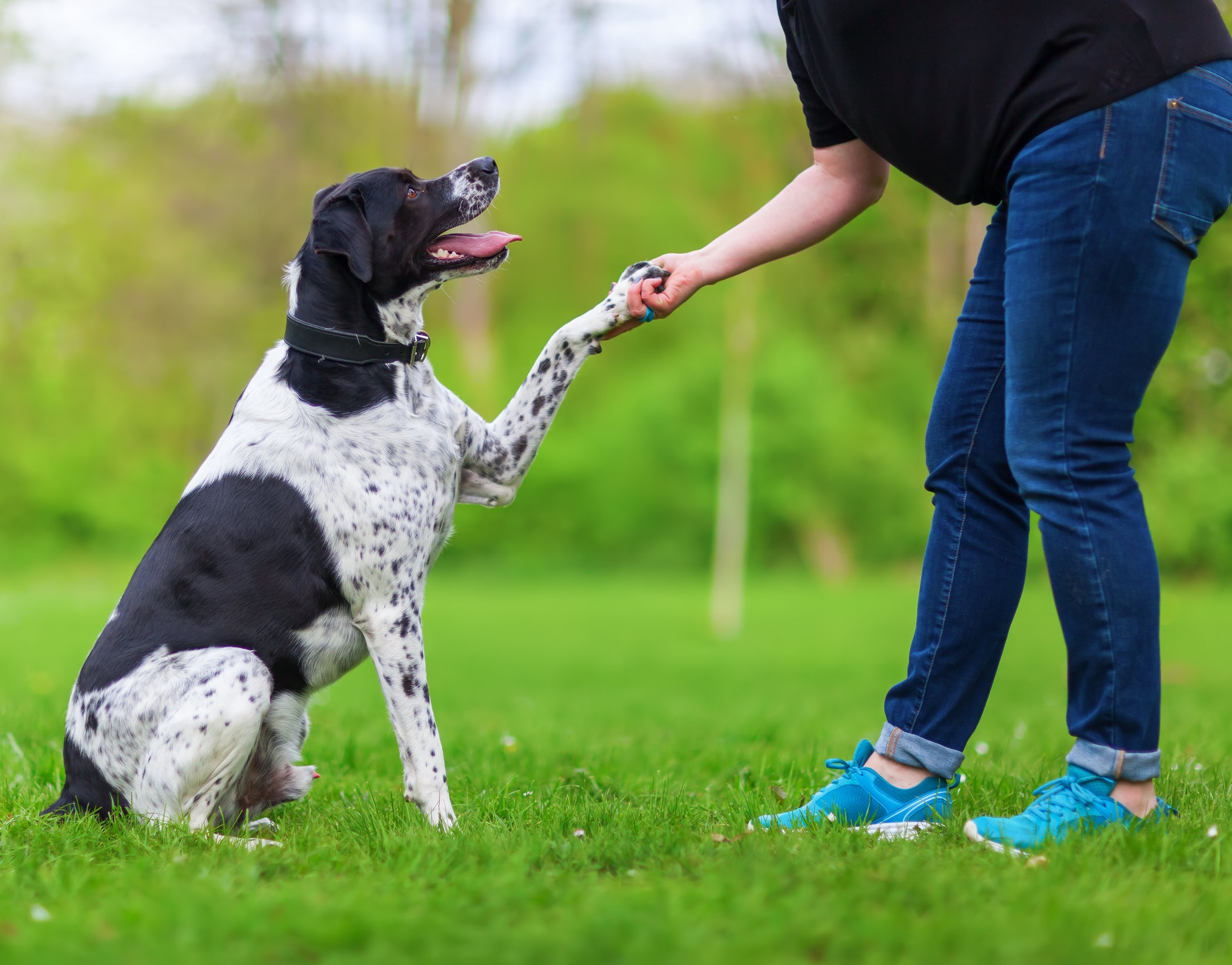 How To Effectively Train Your Dog -