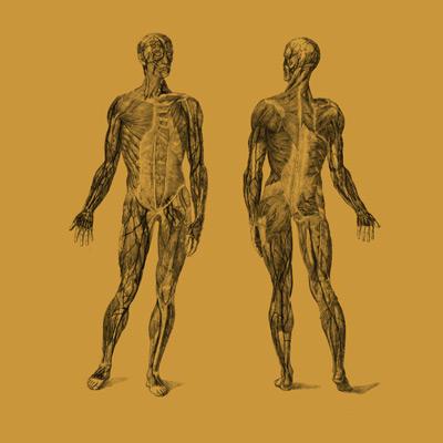 Lesioni muscolo-scheletriche - Cura e prevenzione dello sportivo - di Massimo Meani