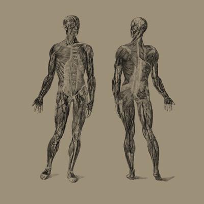 Taping - ginocchio - di Massimo Meani