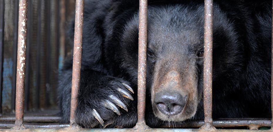 Save a Bear -