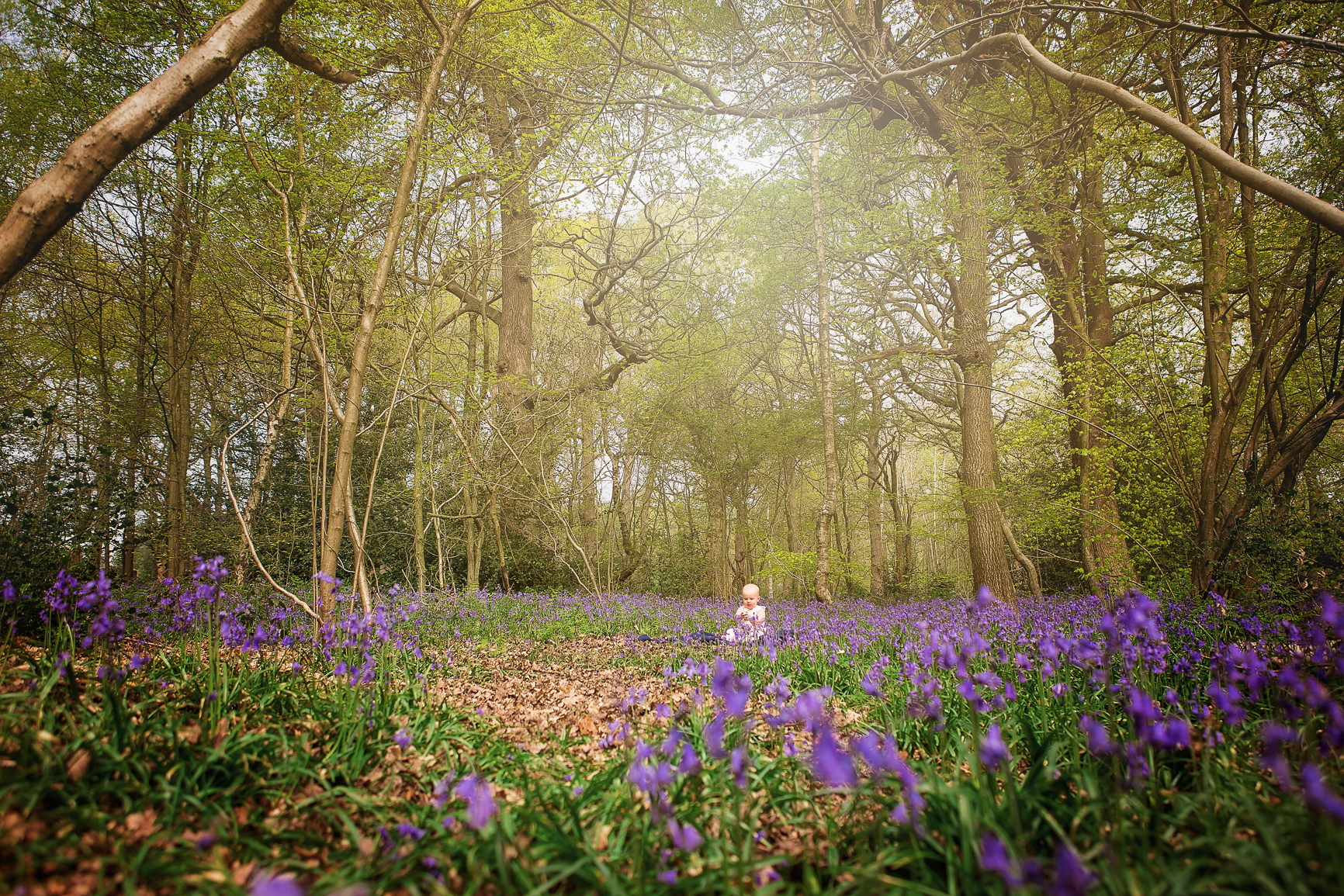 Child Portrait, Bluebells, Swithland Woods, Leicestershire