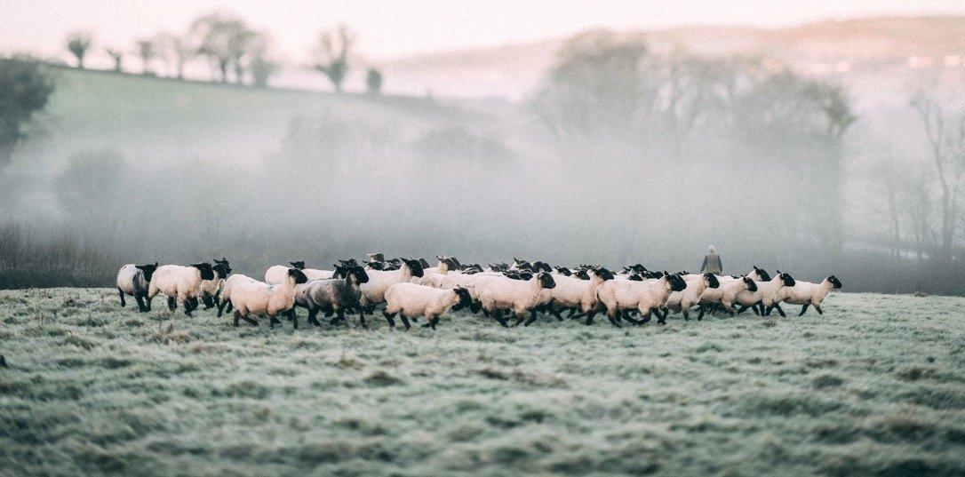Pipers_Farm_Grass_Fed_Lamb.jpg