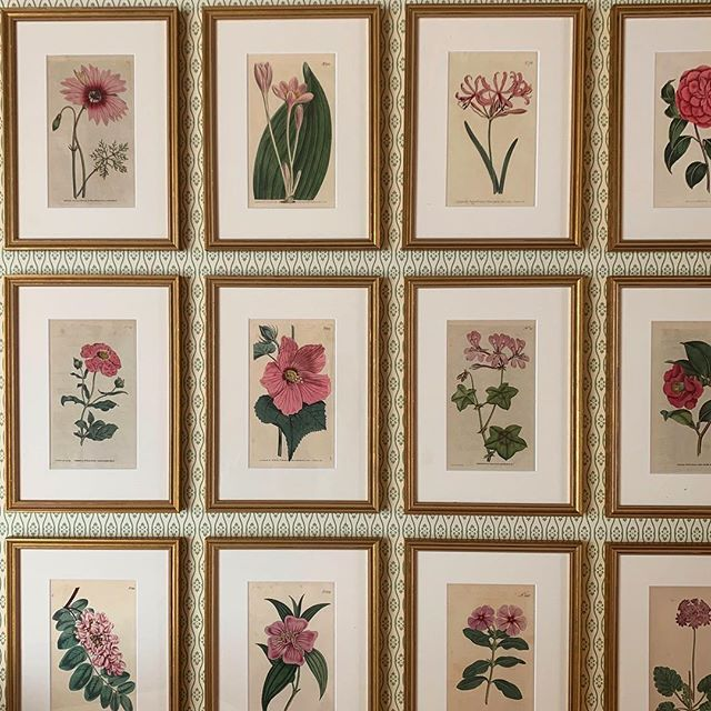 Prettiest pink hand coloured antique botanicals #art #interiors #interiordecor #bedroomdecor