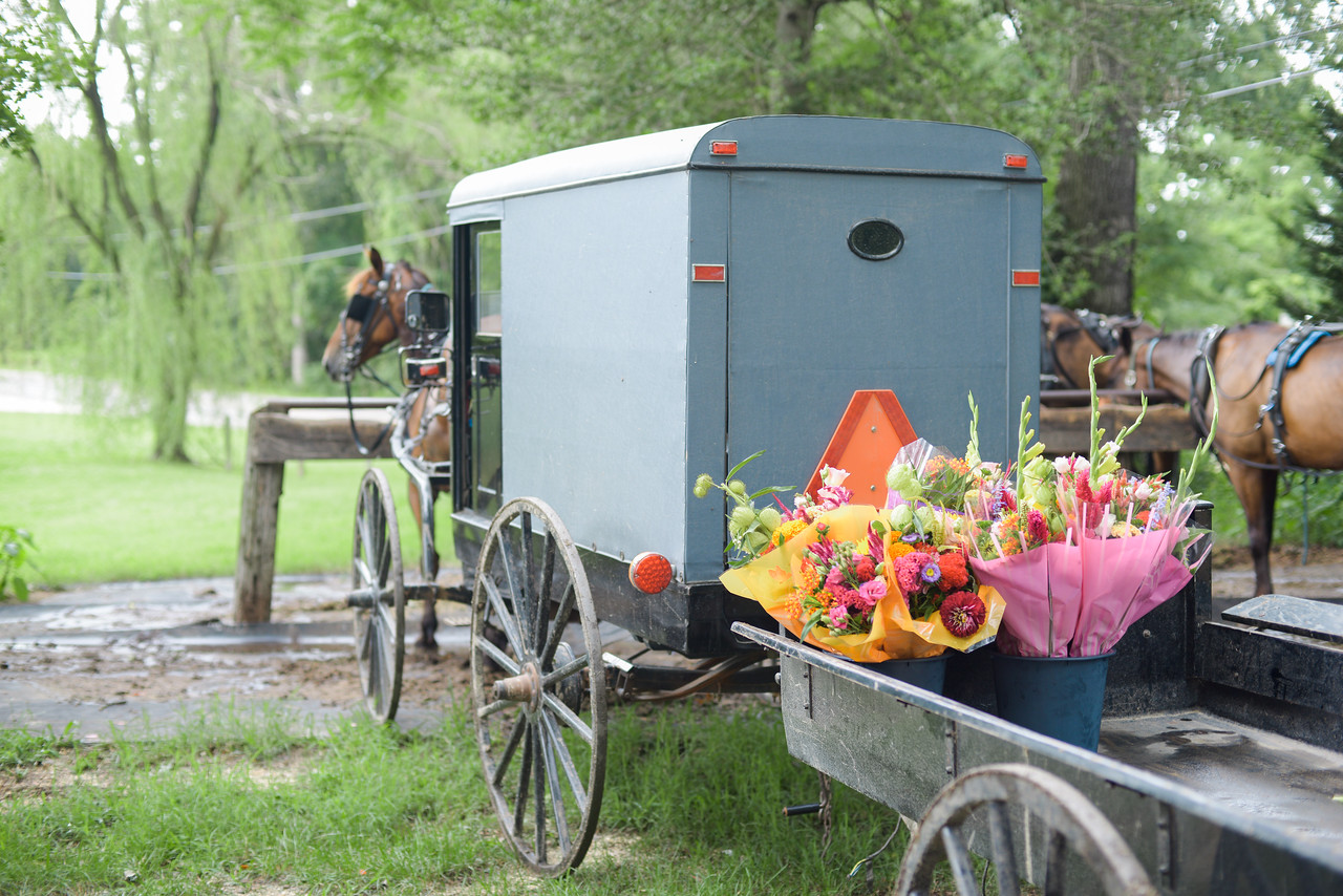 Schiatto Photography Amish Buggy