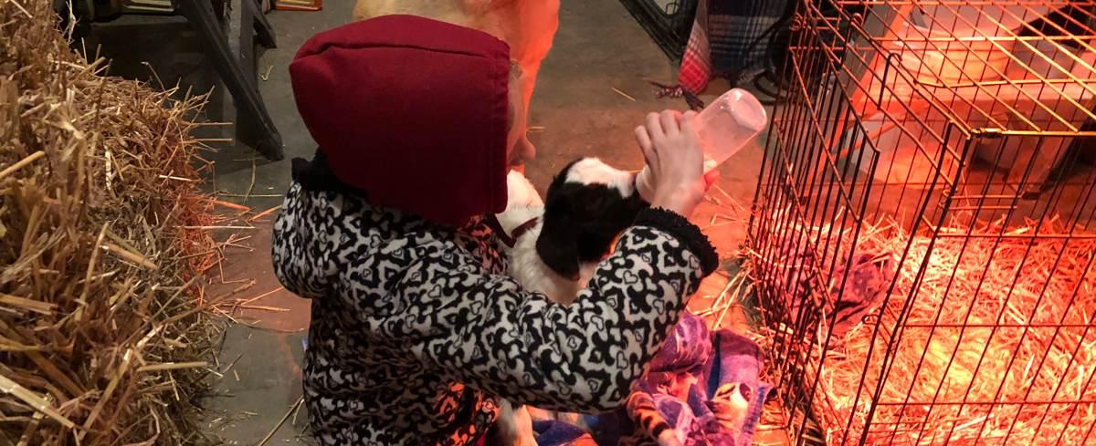 bottle_feeding_goat.jpg