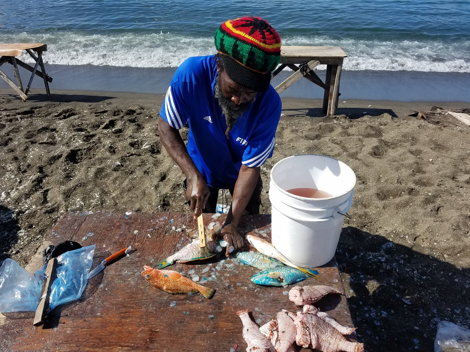Fish+cleaning+in+St.+Kitts.jpg