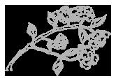 Hydrangea Wedding Symbol.png