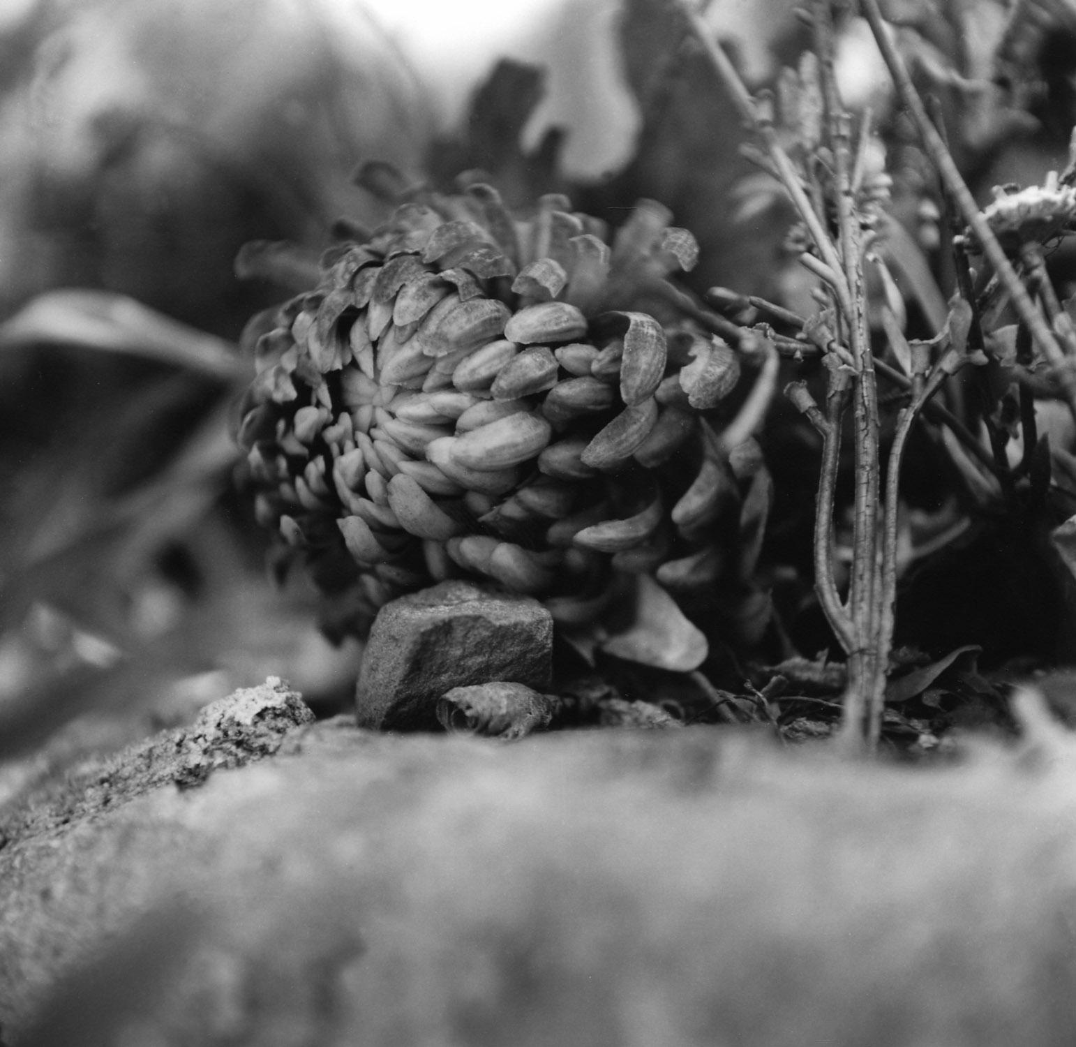 Flowers,Holyland USA01