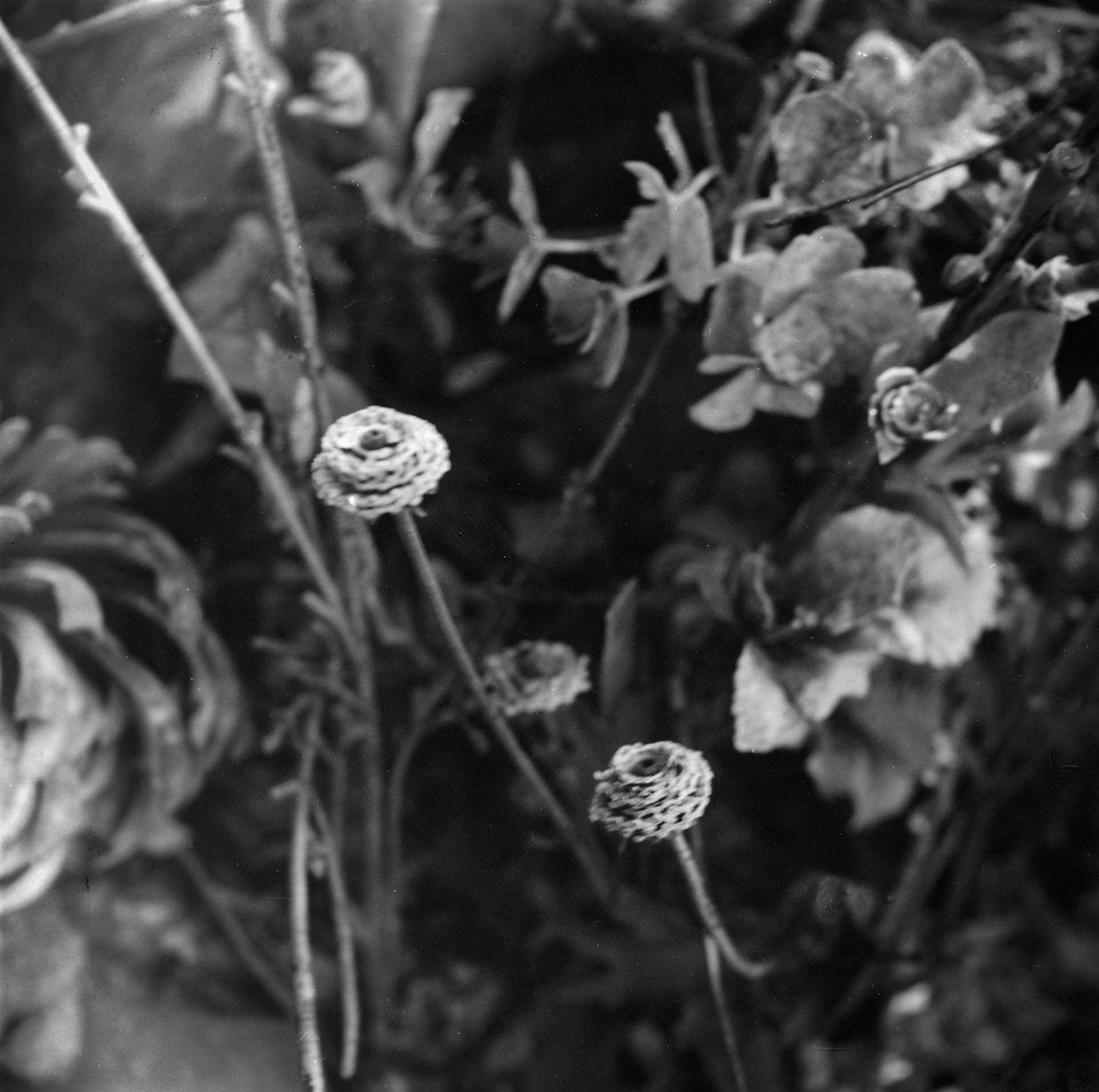 Flowers, Holyland USA.02