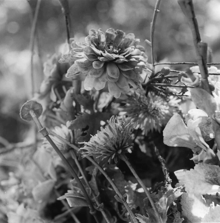 Flowers, Holyland USA.03