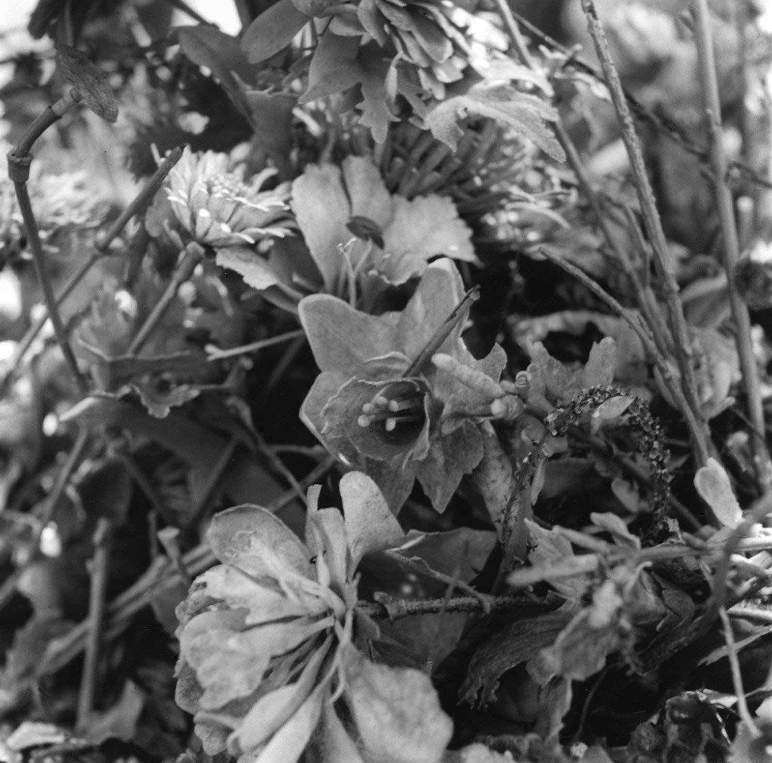 Flowers, Holyland USA.06