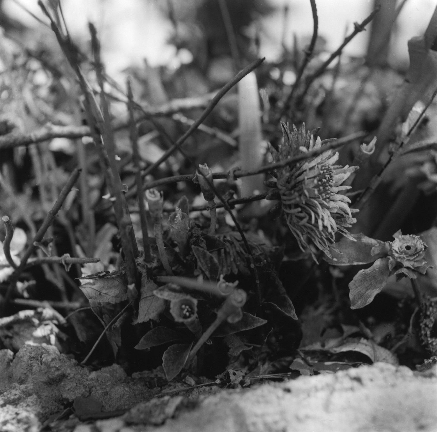 Flowers, Holyland.09