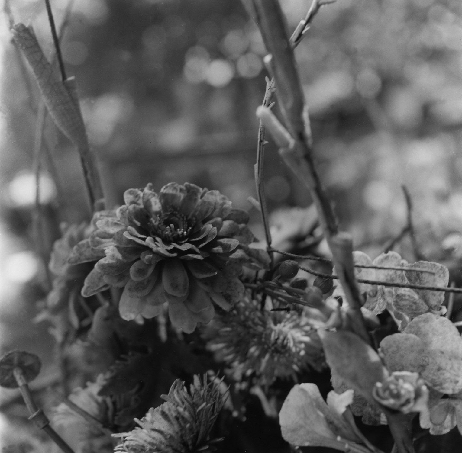 Flowers, Holyland USA.13