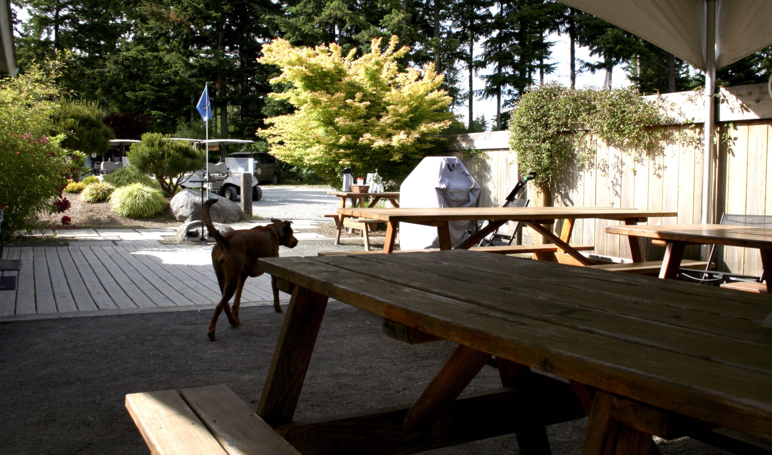 QuadraGolf_picnic-tables_IMG_1555.jpeg