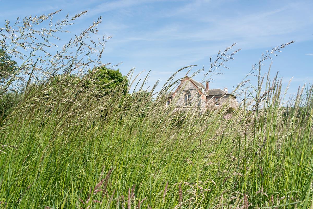 house-grounds9.jpg