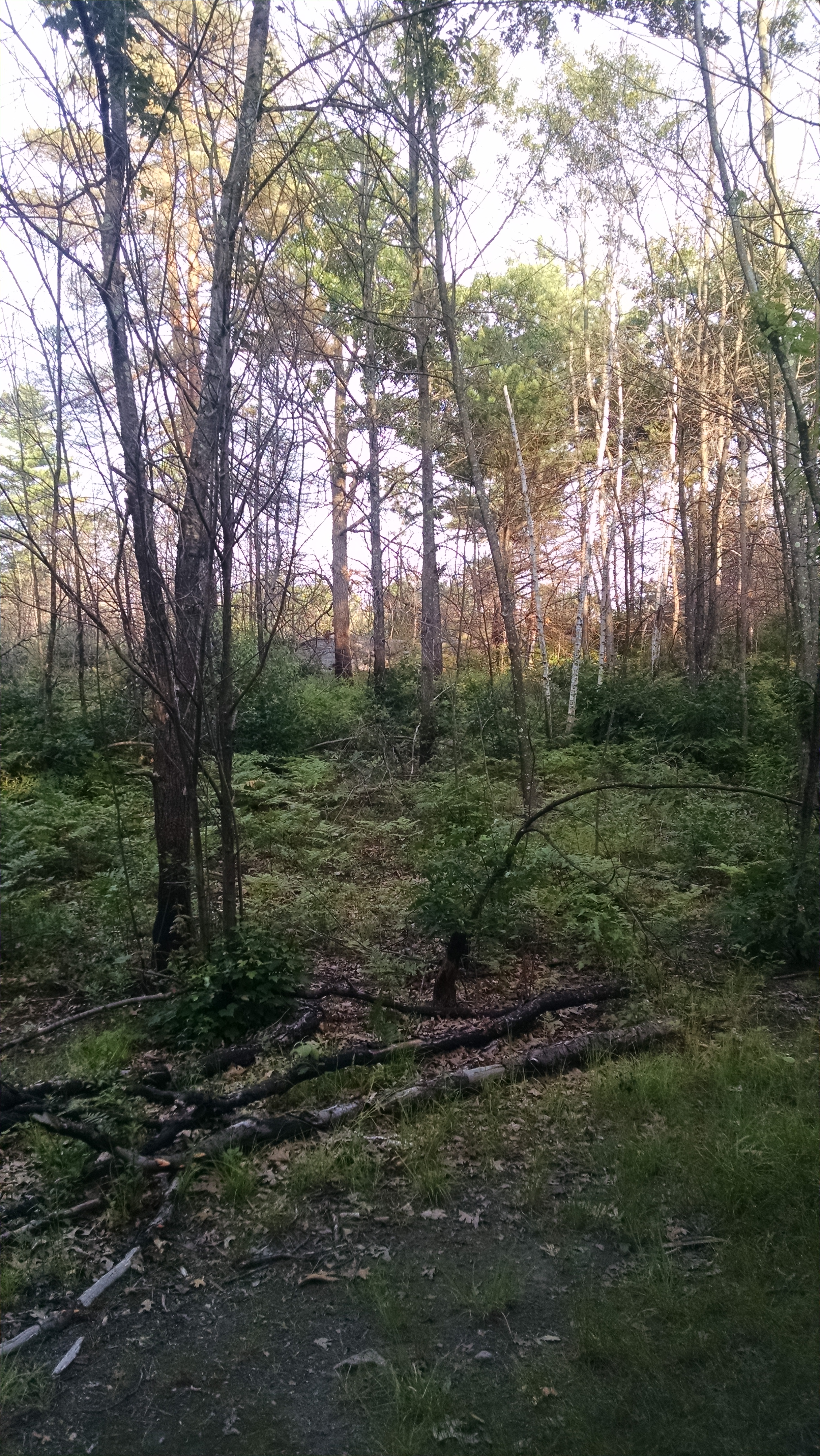 Forest have the benefit of fallen leaves and branches decomposing on site which ultimately release nutrients back into the soil.