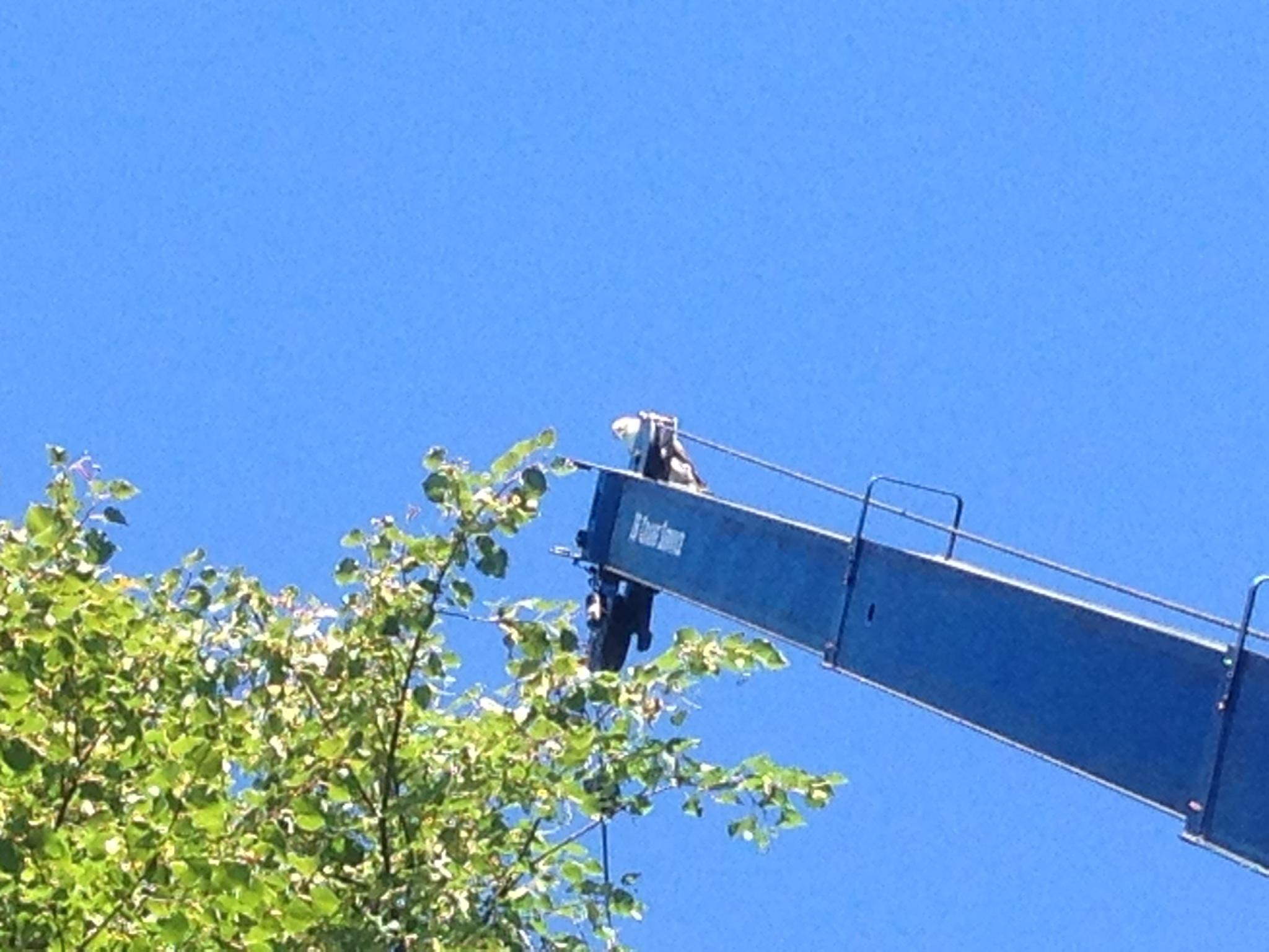 What appears to be a bald eagle resting on top of our crane boom.