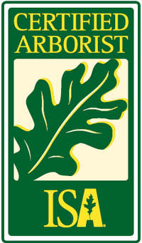 The International Association of Arboriculture began certifying arborists throughout the world in 1992.