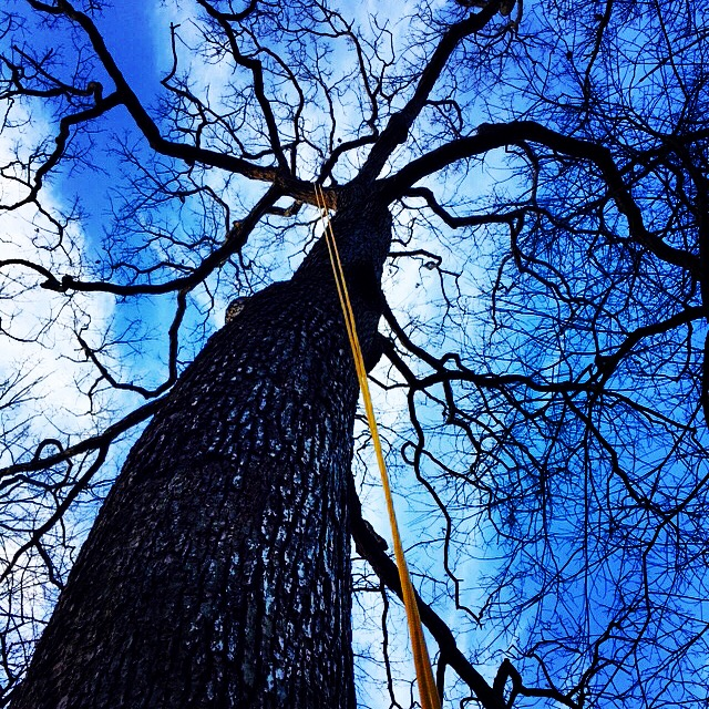 Without the obstruction of foliage, arborists can navigate within trees to evaluate branch structure and make informed pruning decisions quickly.