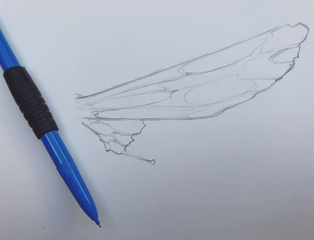 I've been trying to draw some wings on a character of mine in a real awkward position without any luck. So back to basics working out the wing design and  I will be taking some reference photos too to help the process. Here is one of my sketches  #art #artworks #sketching #sketchbook #dailysketch #fairyart #fairywings #insectwings #entomology #insects #pencildrawing #drawing #fantasyart #nature #natureart #adventureart #adventure #myeclecticmix #myhometrend #inspirationeverywhere #ihavethisthingwithcolour #jackbakerart #faystree #artkickstarter #kickstarter @kickstarter