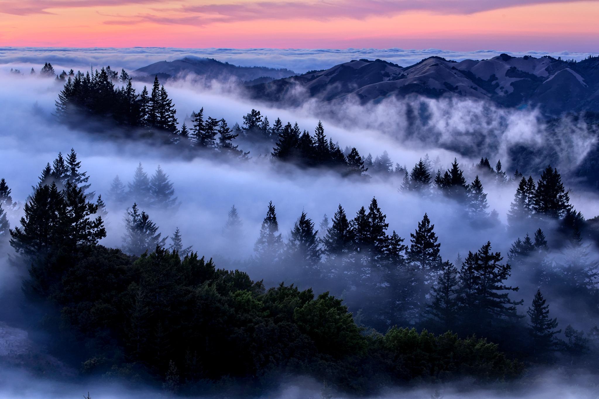 Fog Fever.jpg