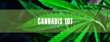 More Cannabis Education