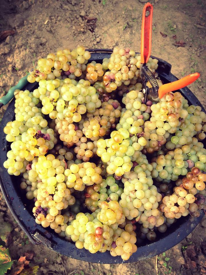 VENDANGES_ECU-6.jpg