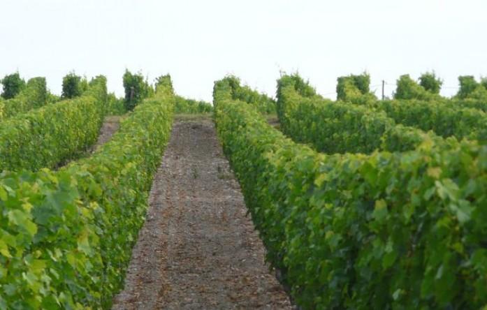 lush vines.JPG