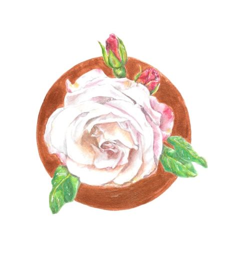 Keita Thomas - Rose Watercolour - Rose Remembered