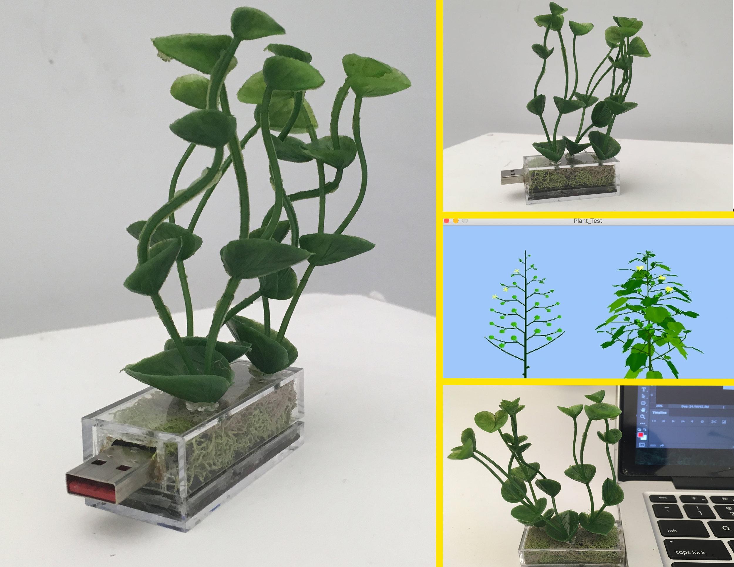 plant_drive.jpg