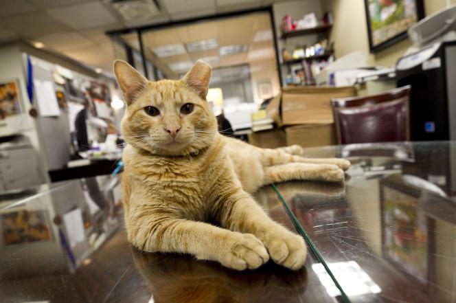 cat-story-1.jpg