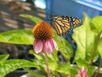 PC: Brooklyn Butterfly Project