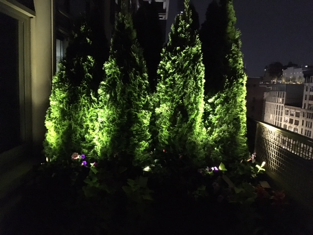Mirador managing partner  Karla Saladino 's uplit trees on her balcony designed by  Logan Yost .