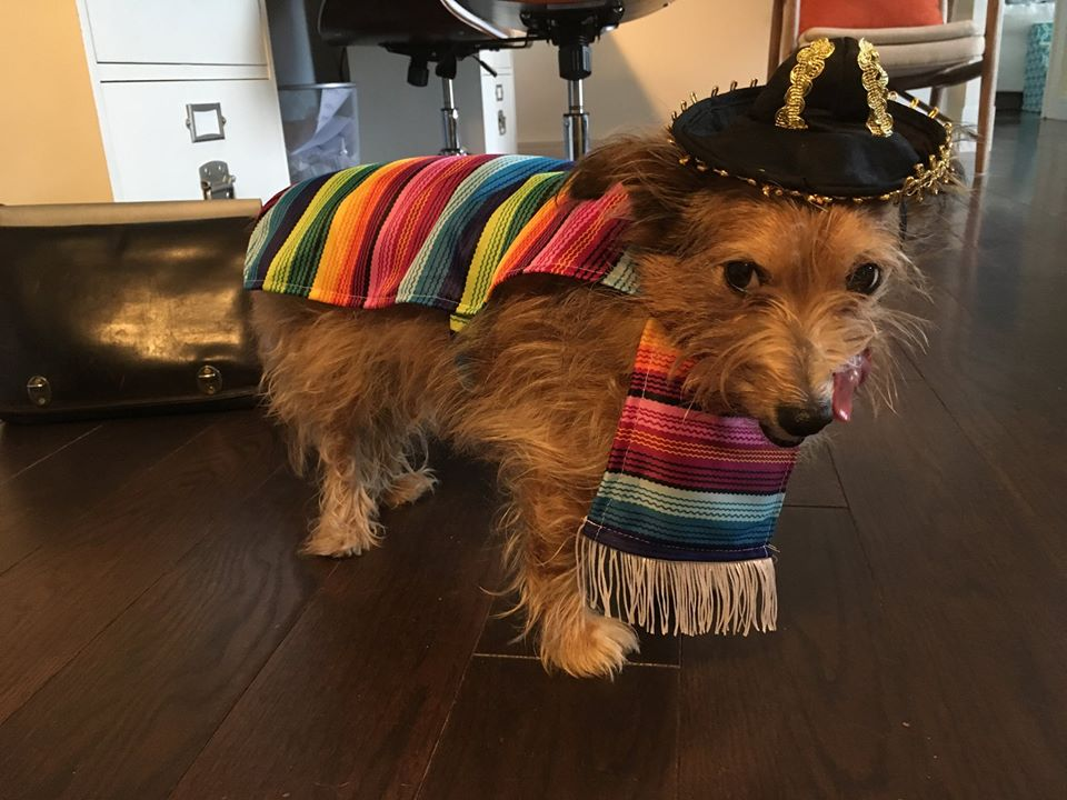 Paul's dog, Sherman
